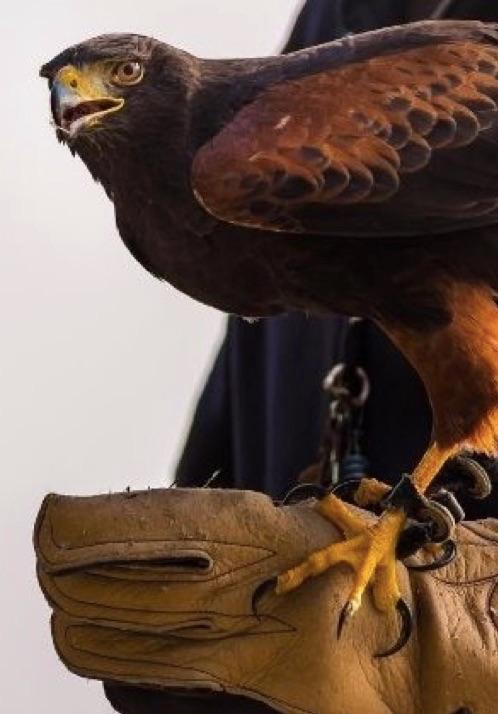 falcon Leather de Matière Première, le gant du faconnier vu par Aurélien Guichard