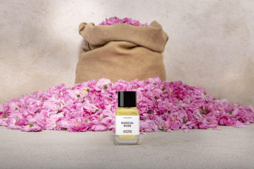 La Rose Centifolia, cultivée par Aurélien Guichard à Grasse, matière première bio du parfum Radical Rose
