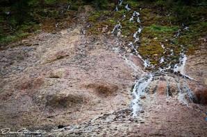 Cascada Urlatoarea (6)