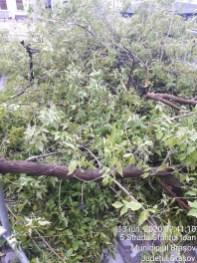curatenie arbori (7)