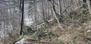 arbori periculosi (2)