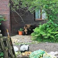 Procedura privind gestionarea situațiilor de urgență generate de animalele sălbatice periculoase la nivelul județului Brașov funcționează! (foto, video)