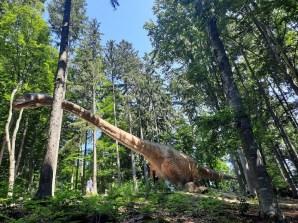 Dino Parc Rasnov_Seismosaurus