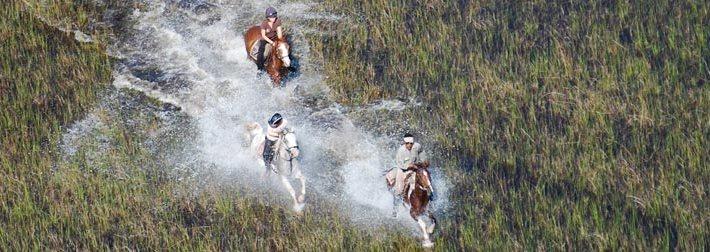 cavaliers au botswana