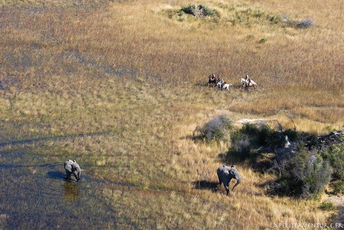 botswana et cavaliers