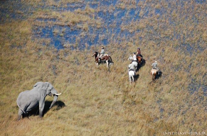 éléphants et chevaux