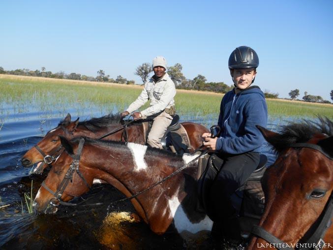 cavaliers dans l'okavango