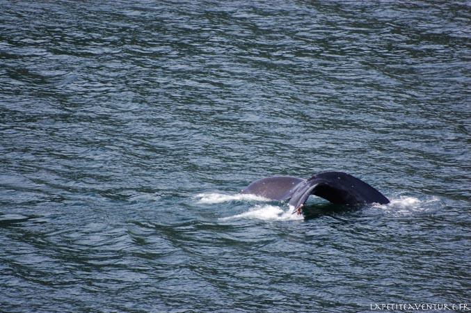 baleine humpback au canada