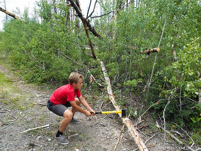 arbre coupée en Colombie Britannique
