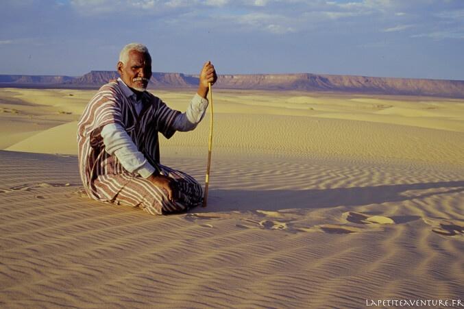 chamelier dans les dunes en Mauritanie