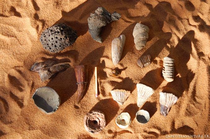 fossiles du désert du Maroc