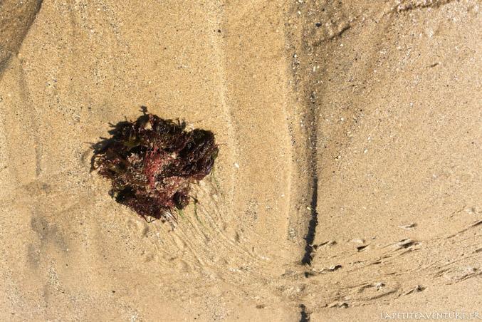 araignée à la pêche à la crevette