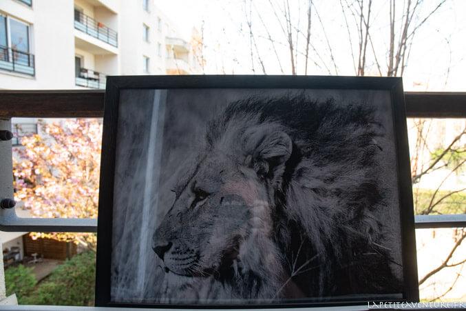 Portrait de lion en noir et blanc