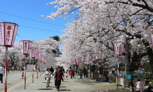 Festival del Cerezo