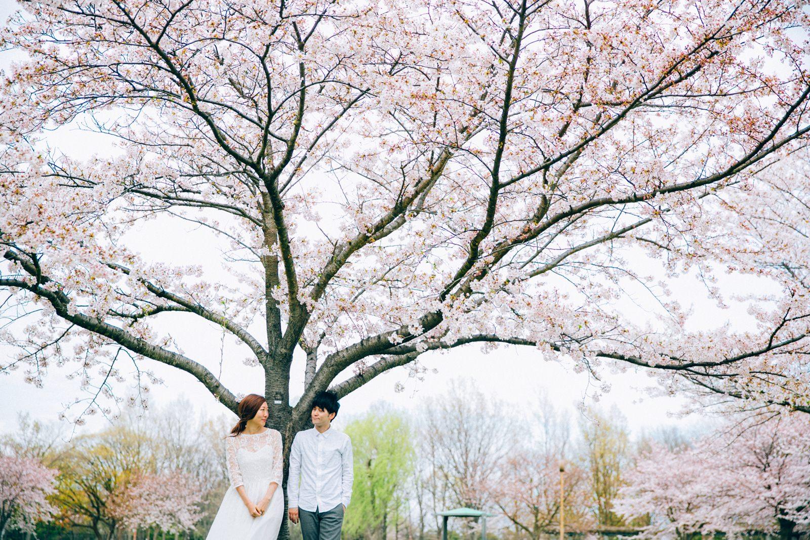清新櫻花婚紗拍攝  就在東京