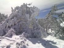 Árboles de blanco
