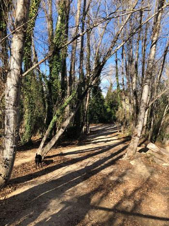 árboles durante la ruta