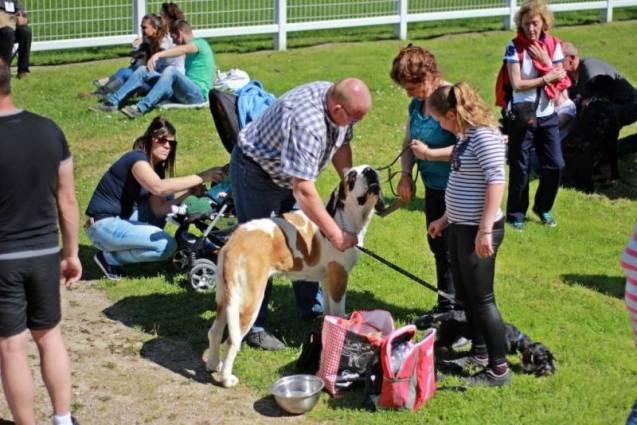 expo-canine-vittel (2)