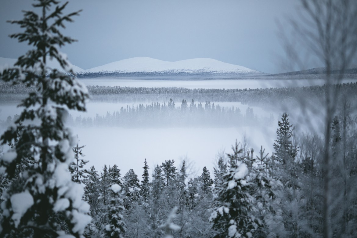 Landscape-of-Lapland-forest