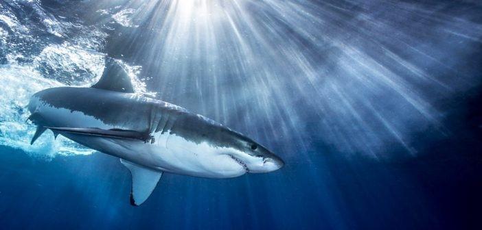 SharkSpotter
