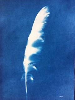 Plume 1, cyanotype, 24x16cm ©GLSG