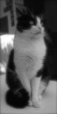 """""""L'idéal du calme est dans un chat assis."""" (Jules Renard)"""