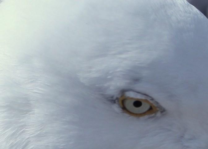 En tête à tête, les yeux dans les yeux... 4