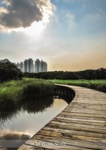 16 Wetland Park