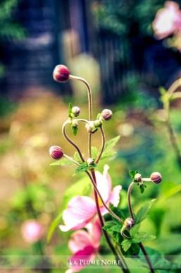 7 Flower