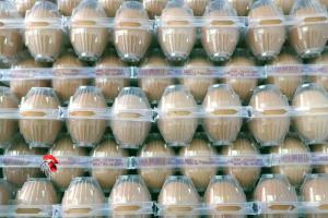 Huevos Morenos