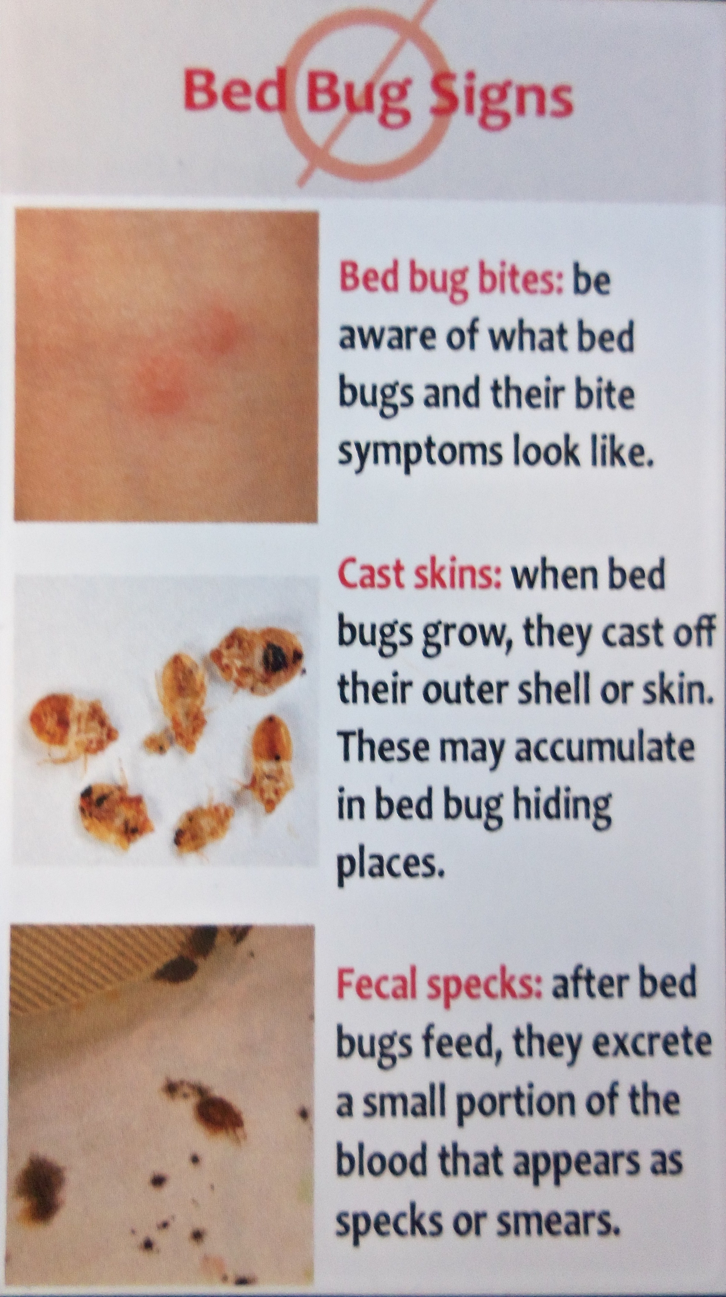 Bed Bugs Information Sheet