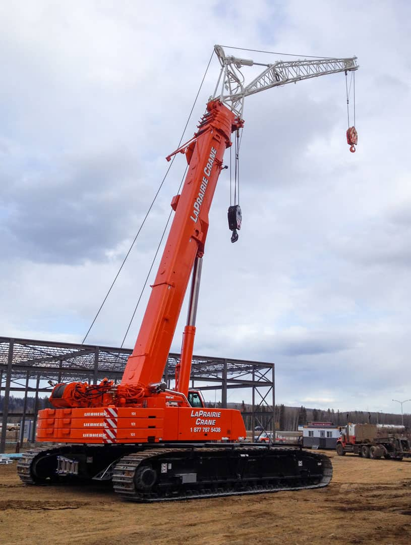 Crane - Sask (1)