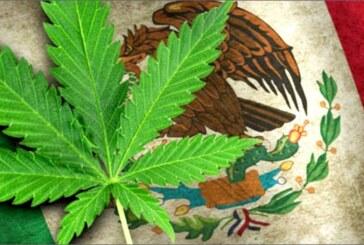 Le Mexique en passe de légaliser le cannabis ! Le Sénat approuve….