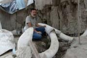 14 mammouths sortent de terre au Mexique, découverte exceptionnelle ! (Video)