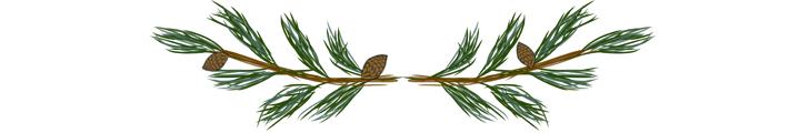 separateur-blog-LPN