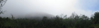 Panoramic fog