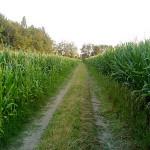 """Misure urgenti per l'agricoltura"""