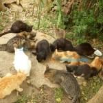 Gatti malati e maltrattati a Cascinagrossa. Salvati dalla Municipale
