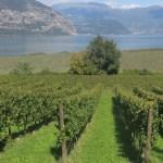 Franciacorta: una terra d'eccellenza a livello culinario