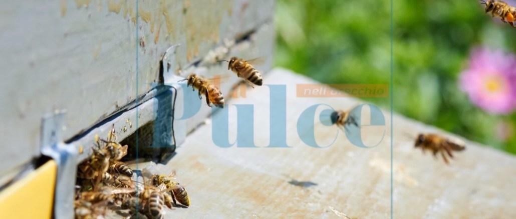api miele apicoltura
