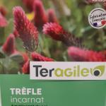 Engrais vert_Trèfle incarnat_Tall red clover