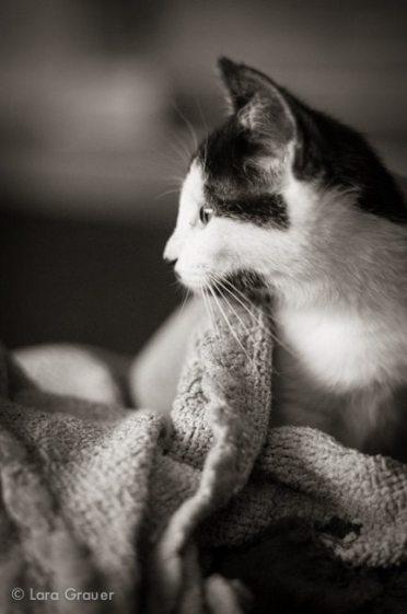 gentle+cat+profile