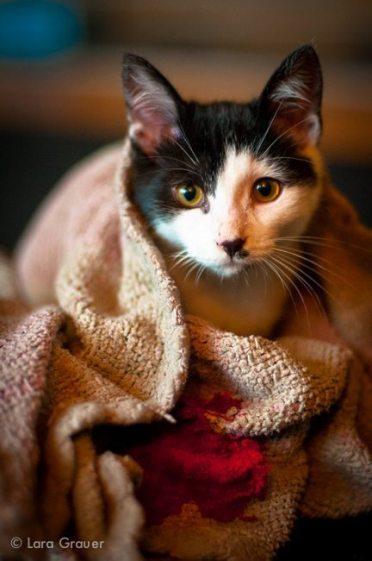 snuggle+kitten