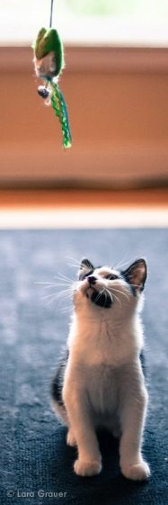 taunt+the+cat