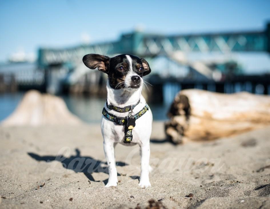 Sherman+on+the+beach