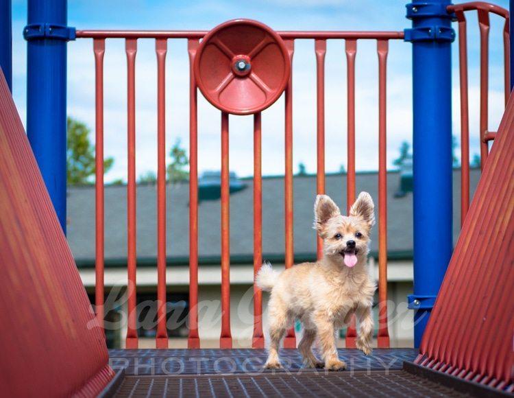 Wilson+on+the+playground