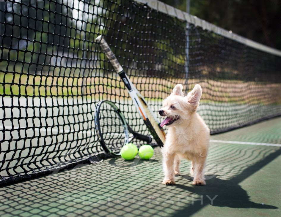 Wilson+on+the+tennis+court