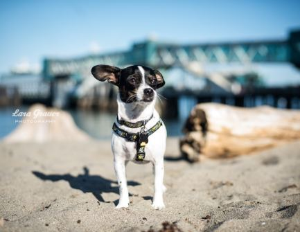Edmonds Ferry Dock - Photo Shoot Locations In The Seattle Area - Lara Grauer Photography