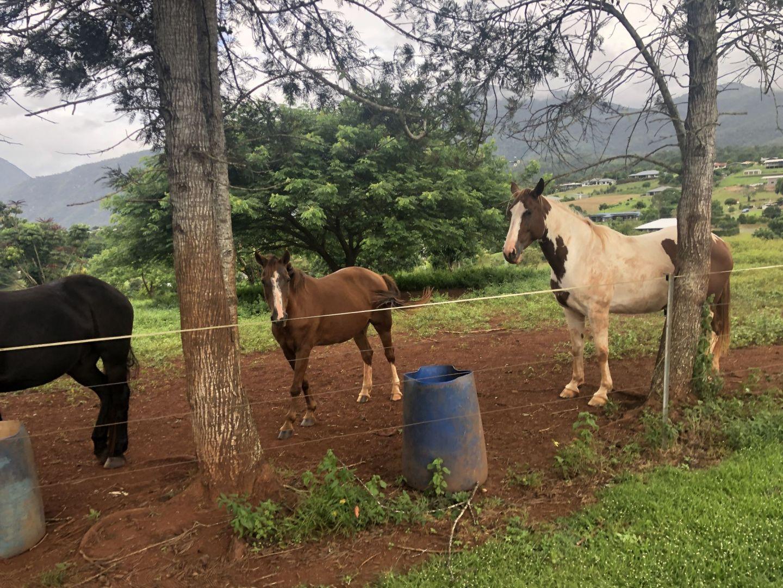 Lara Lain larasstory blog cairns horses