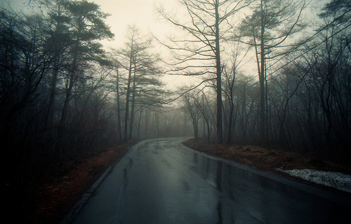 forest-nature-photography-rain-Favim.com-800620